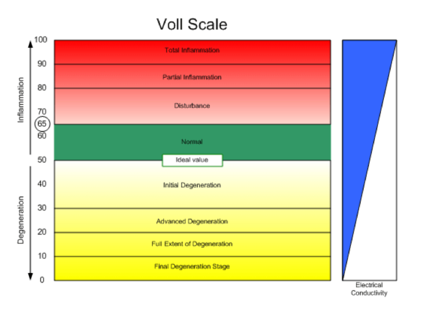 voll-scale